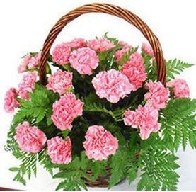 网上订花-幸福之花
