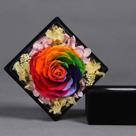 鲜花定购-永生花 单朵彩虹