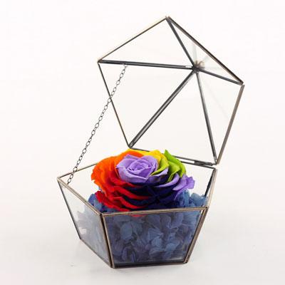 订花-五星玻璃花房 七彩玫瑰