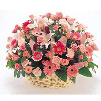 中秋节礼物                                                                                          鲜花网:春天的阳光