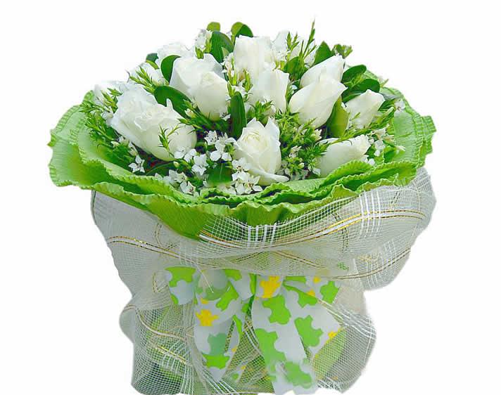 德州鲜花:淡淡浮萍