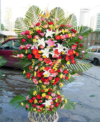 香港市花篮-根深叶茂