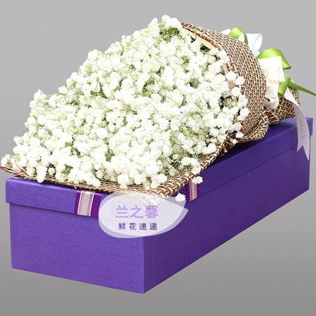 护士节礼物                                                                                          鲜花网:纯白的爱恋