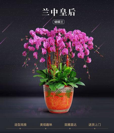南京六合区绿植:蝴蝶兰